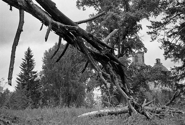 Заброшенные храмы в деревнях похожи на мертвые деревья в лесу. У одних они вызывают жалость об ушедшей жизни, у других — желание их вырубить или снести. Но церкви отличает надежда на воскресение из мертвых и обретения былой славы. Лишь бы фундамент и несущие стены сохранились.