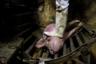 Чтобы оглушить свинью, ее направляют в специальный загон, прислоняют к голове электроды и дают разряд. Если все сделано верно, животное теряет сознание, однако судороги могут продолжаться. Чтобы свинья не дергалась, рабочие, как правило, прижимают ее сапогом к полу.