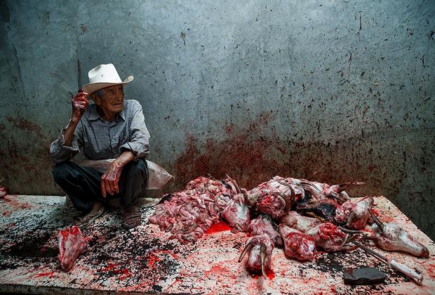 """«Не существует """"гуманных"""" способов прервать жизнь животного, — говорит Гармендиа. — Жестокость — это обязательная часть всего процесса. Я видел больных, изнуренных животных, которых везли на скотобойни. Некоторые много часов ждали гибели в таком состоянии»."""