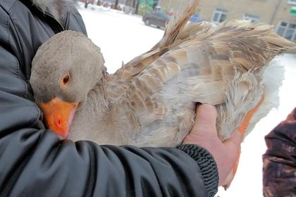 Россиянин забил жену до смерти мухобойкой и тушкой гуся
