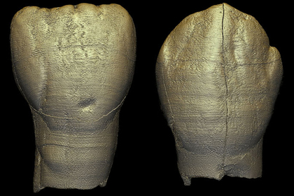 Найдены останки загадочного древнего ребенка