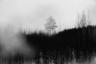 В Рахье во время войны находилось очень много тайников с боеприпасами. Местные даже говорят иногда, что если бы поселок попал под сильный артобстрел, весь Ленинград взлетел бы на воздух. Сейчас следопыты пытаются найти эти тайники в зарослях и лесах.  <br><br> На фотографии одно из самых популярных мест поисков.