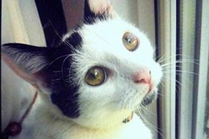Кот вернулся к похоронившей его хозяйке через три года