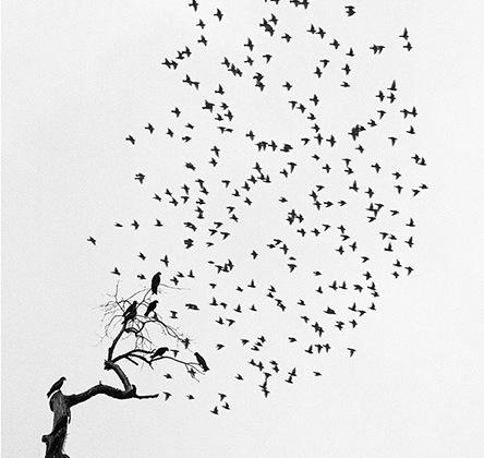 На снимках Саммаллахти птицы показаны как обитателями дикой природы, существующими отдельно от человека, так и незаметными свидетелями людской жизни. Большинство фотографий мастера сделаны в зимнее время.