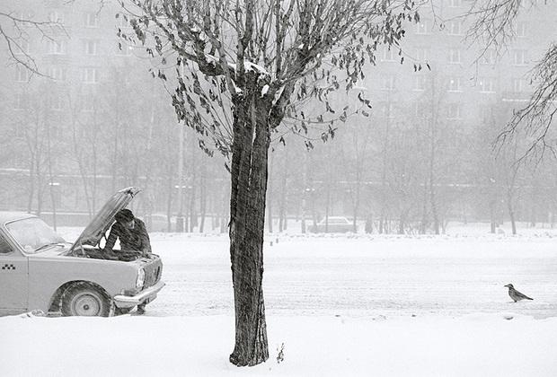 Например, для серии животных из России Саммаллахти отправился на Соловки. Там фотограф провел две недели, снимая, в частности бродячих собак и птиц.