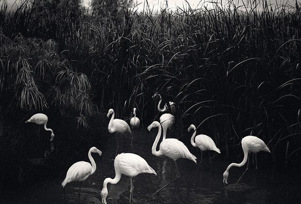 В экспозицию «Птицы» вошли снимки, сделанные во время путешествий фотографа по скандинавским и восточно-европейским странам, Индии, Намибии, Египте, Японии и Южно-Африканской Республике.