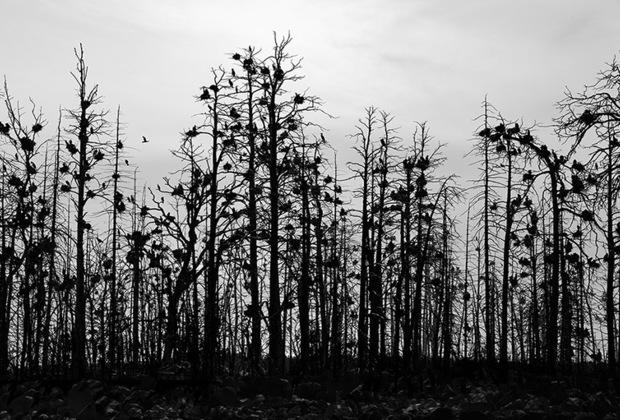 Саммаллахти родился в Хельсинки в 1950 году. В 14 лет он вступил в местный клуб фотографов, а в 21 год уже провел свою первую сольную выставку.