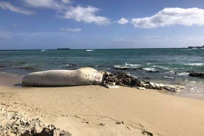 Убранного с берега разлагающегося кита принесло обратно