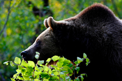 ВСША потерявшийся влесу ребенок поведал, что его спас медведь