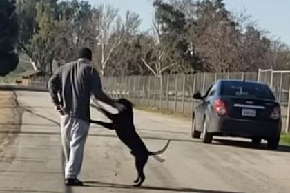 Хозяин бросил доверчивую собаку и уехал прочь