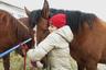 Если вы хоть раз обняли коня, вы уже не сможете относиться к ним равнодушно