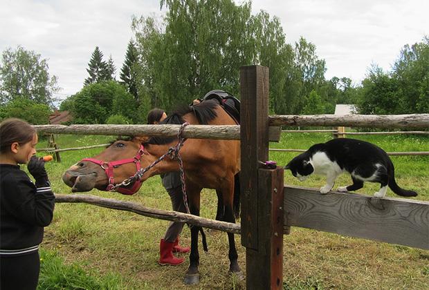 Кураторы, у которых есть такая возможность, берут лошадей на лето. Трехлетка Гера русско-литовской породы проводит каникулы в Тверской области, где полно сочных лугов, можно вволю пастись и купаться в реке