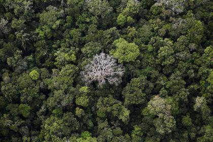 Женщина пробежалась по аэродрому голышом, устроила переполох и скрылась в лесу
