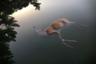 Измученный жаждой олень перепрыгнул маленькую стенку, отделяющую его от бассейна, и упал в воду. К сожалению, он не смог выбраться и погиб. Лето 2017 года было особенно жарким в Каталонии: реки и ручьи были иссушены до последней капли.   <br> <br>  Снимок задает зрителям немой вопрос, можно ли считать несчастное животное жертвой глобального потепления. Фотография победила в номинации документальных снимков.