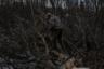На морозе выздоравливающий пилит поваленное бобром дерево, а еще несколько человек складывают поленья в грузовик. <br></br> Тяжелый труд проходит не без жалости к себе, но люди прекрасно отдают себе отчет, что так надо.
