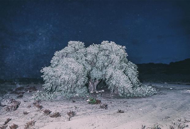 Поощрительная премия от жюри конкурса досталась греческому фотографу Йоргосу Ятроманолакису за работу «Раскрытие кокона и медленное распахивание крыльев». Эта серия — поэтическая саморефлексия, помогающая мастеру разобраться в себе и метафорически изобразить собственные метаморфозы.