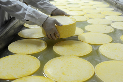 Власти Подмосковья анонсировали производственную мощность сырного кластера