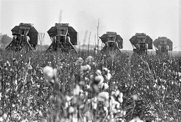 13 июля 1973 года. Узбекская ССР. Хлопкоуборочные комбайны убирают новый урожай хлопчатника