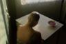 Россиянке Алене Кочетковой может достаться победа в номинации «Портрет». «Когда я была больна» — автопортрет Кочетковой, который она сделала после операции и курса химиотерапии. У девушки диагностировали рак. Несмотря на то что это слово у всех на слуху, мало кто представляет, что переживают больные раком. Кочеткова показала свой путь от страха и отчаяния до надежды на выздоровление.