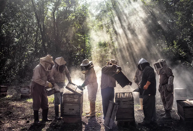 Группа пчеловодов ухаживает за ульями в маленьком мексиканском поселке Тинуне. Местные пчеловоды жалуются на фермеров, выращивающих сою на полуострове Юкатан. Агрохимикаты, которые они используют, загрязняют сельскохозяйственные культуры и снижают рыночную стоимость меда, угрожая его органическому происхождению. Номинант в категории «Окружающая среда».