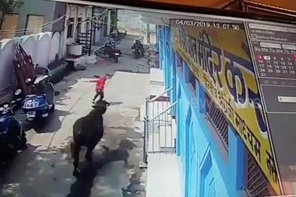 Мальчик чудом избежал гибели под копытами бегущих буйволов