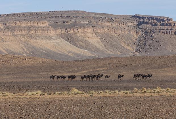 На безводных каменистых плато могут выжить только верблюды.