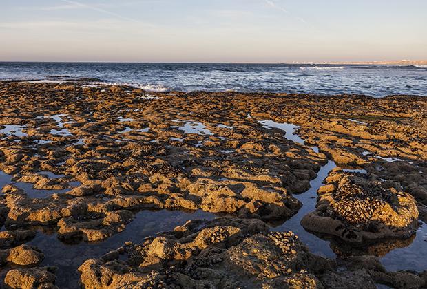 К исходу первой недели ралли добралось до Атлантического океана. Берег состоял из миллиардов ракушек: одни умирали, и поверх их сразу же зарождалась новая жизнь.