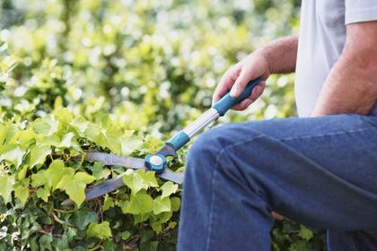 Мстительный садовник поставил смертельные ловушки на бывших клиентов