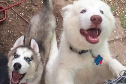 У откусивших ребенку руку собак нашлись десятки тысяч защитников