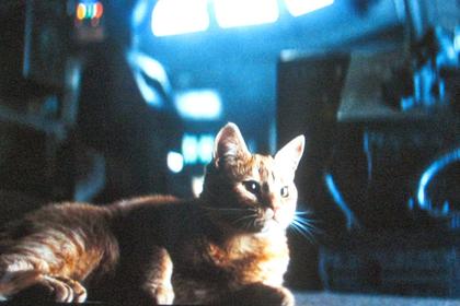 Названы самые знаменитые актеры-коты