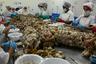 Ныряльщики — самое бедное и уязвимое звено в индустрии добычи и продажи омаров. В 2017 году Гондурас практически полностью занял рынок лобстеров в США и продал американцам омаров на сумму 40 миллионов долларов. Разумеется, до мискито дошли лишь крохи.