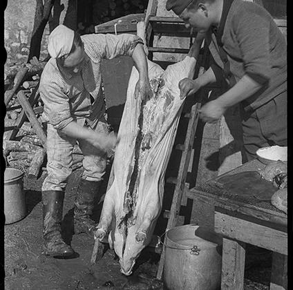 Февраль, 1941 год. Руи, Франция.