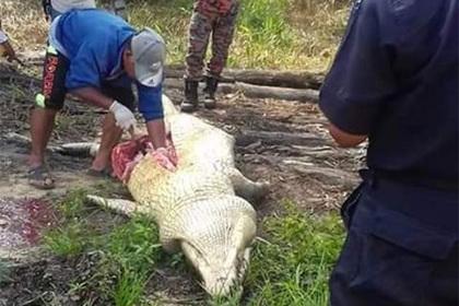 Пропавшего рабочего нашли внутри крокодила