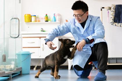 В Китае начали тренировать клонированную полицейскую собаку