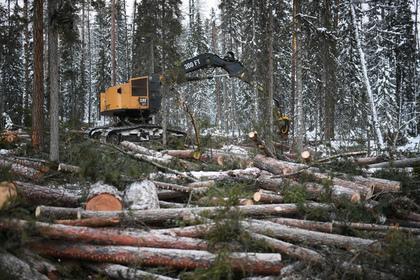 Хабаровские рабочие лесной отрасли массово лишились работы