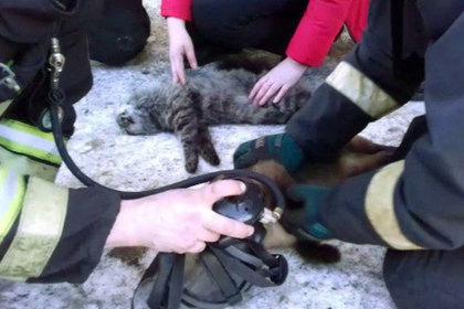 Российские пожарные вытащили котов из горящего здания и вернули их к жизни
