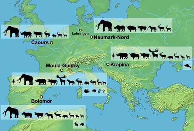Останки животных, найденных на доисторических стоянках, датированных микулинским межледниковьем