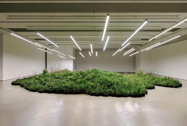 Модный бренд Jil Sander пригласил создать свою инсталляцию Adjacent Field («Ближнее поле») на Salone del Mobile австралийскую художницу, видеоперформансистку и экологическую активистку Линду Тегг. Она высадила прямо в помещении, напоминающем бетонный ангар с лампами дневного света, «поляну» дикорастущих трав, суккулентов, цветов и мхов.