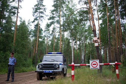 Тело экстремала нашли прикованным к дереву в подмосковном лесу