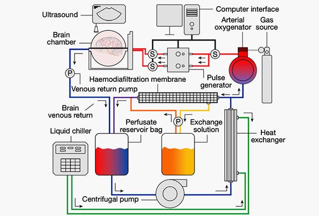 Система имитации кровообращения