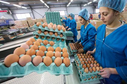 В Роскачестве проверили яйца на прочность и не выявили достойных