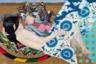 На Венецианской биеннале выставка бурятского художника, воспитанного одновременно русской академической традицией и космополитизмом современного европейского искусства, пройдет в параллельной (то есть неофициальной) программе. Что ж, логично — в эклектике его беззастенчивого, разгульного стиля отсутствует даже намек на желание угодить конъюнктурам и кураторским обобщениям.