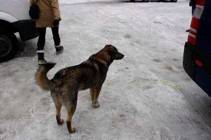 Припять окрестили городом собак
