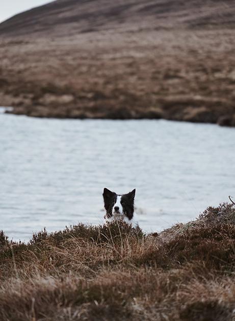 Шотландцы обожают домашних животных и не представляют своей жизни без них. Особенно если речь идет о собаках. К слову, каждый четвертый житель страны владеет минимум одним псом. А о разнообразии их пород, стрижек и окрасов можно написать отдельную статью.  <br> </br> Кроме того, многие известные породы были выведены именно в Шотландии. Например, золотистый ретривер, колли, скотчтерьер, шелти, бордер-терьер и шотландский сеттер.