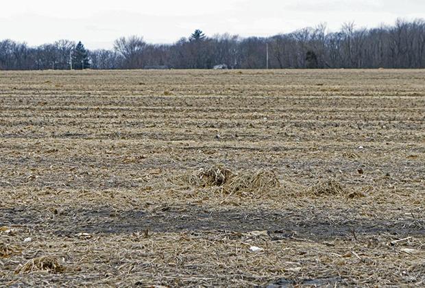 Кукурузное поле в Краун-Пойнте, где было найдено тело убитой Робин Шафаш