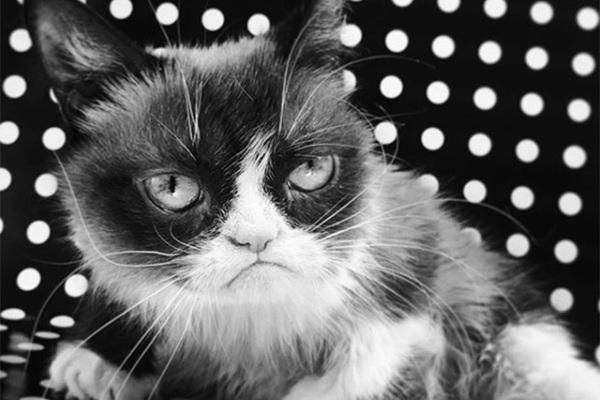 Умерла легендарная сердитая кошка Grumpy Cat: Интернет