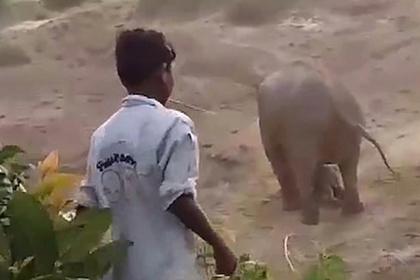 Разъяренная слониха отомстила за слоненка