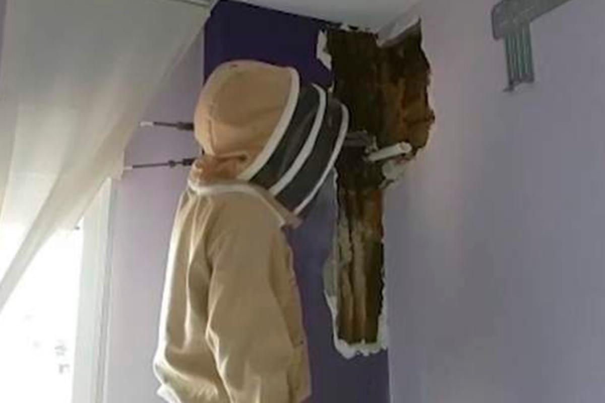 Image result for Пара два года прожила с 80 тысячами живых пчел в спальне