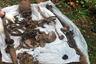 В лесу около СНТ «Орбита» в Пушкинском районе Подмосковья обнаружили кости захороненного примерно 20 лет назад человека. На месте нашли кожаные туфли с фирменным обозначением VERSUS. Жертве могло быть от 22 до 27 лет. Телеканал опубликовал восстановленный экспертами фоторобот убитого и призвал зрителей, которые располагают информацией о нем, связаться с полицией на условиях анонимности.