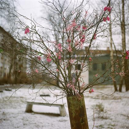 Ломоносов — бывшее поместье фаворита Петра I Александра Меншикова. Он назвал его Ораниенбаум, что в переводе с немецкого означает померанцевое или апельсиновое дерево.